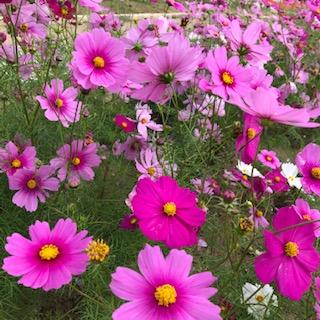 http://www.810810.co.jp/blog_run7/1113/IMG_2361.jpg