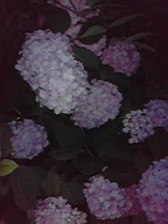 http://www.810810.co.jp/blog_run7/ajisai.jpg