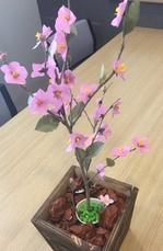 image1.jpeg桃の花.jpeg
