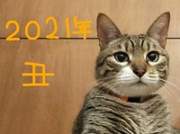 41723 (002)_LI.jpgのサムネイル画像